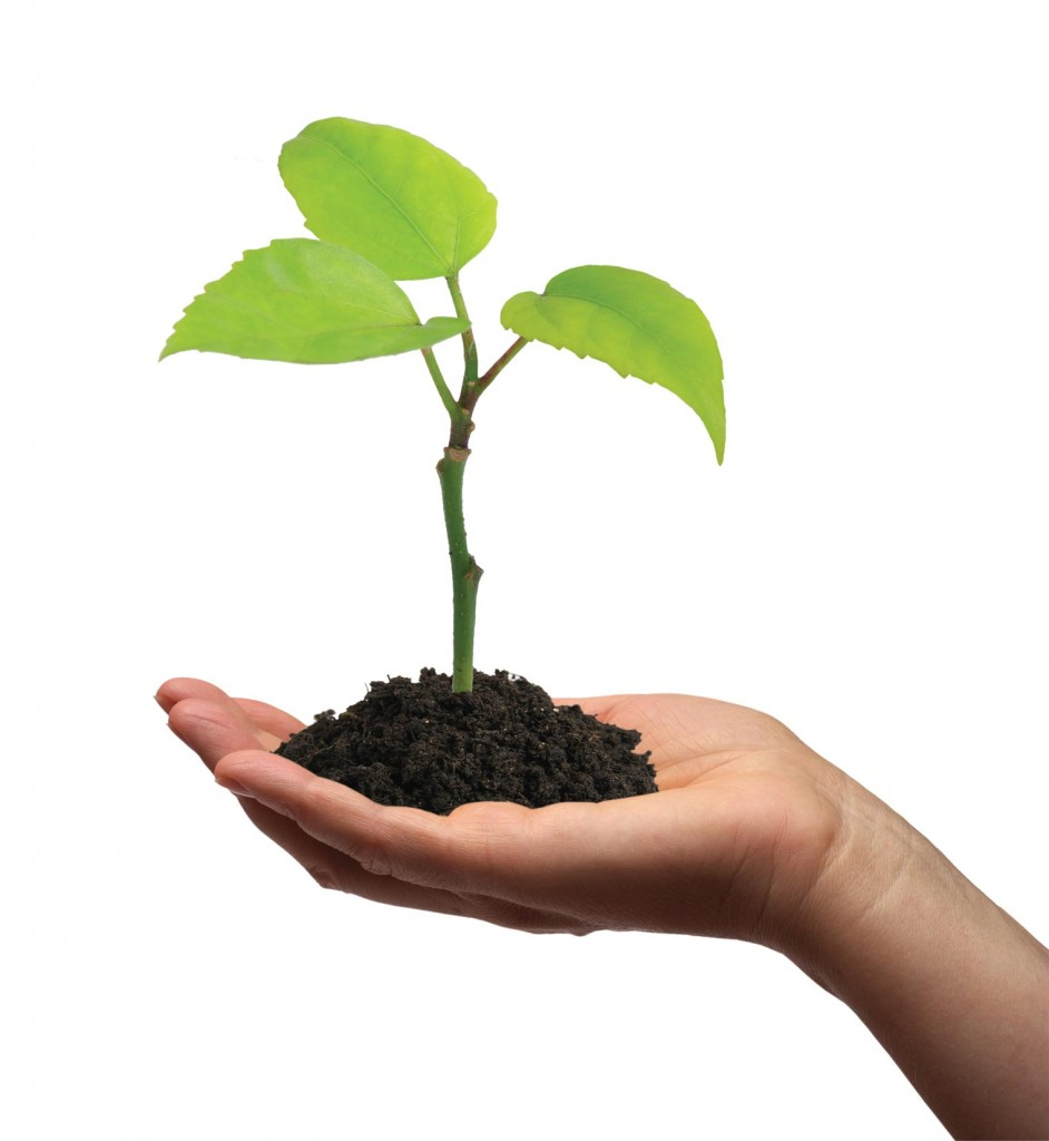 plant-in-hand